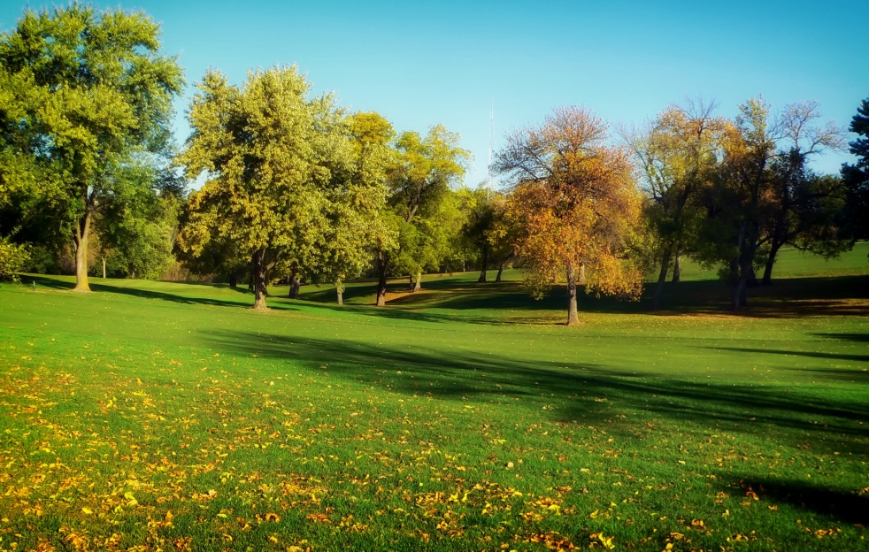 large grassy park with trees